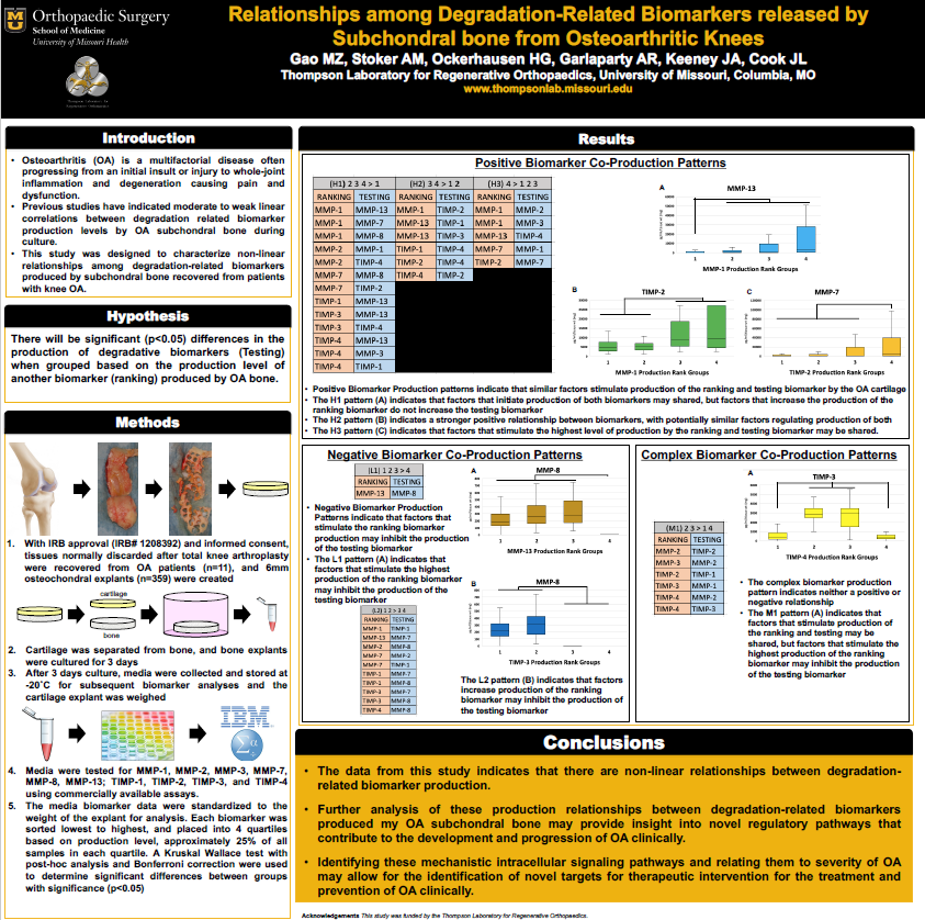 Image of Matthew Gao's research poster.